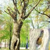 江西九江风景树成了垃圾桶